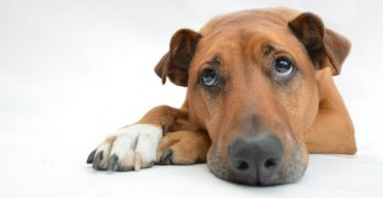 Cancer in Dogs: Types, Symptoms, Prevention, and Treatment