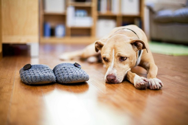 Signs & Symptoms That Your Dog Is in Pain and Others