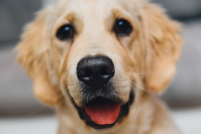 save your dog with dog insurance
