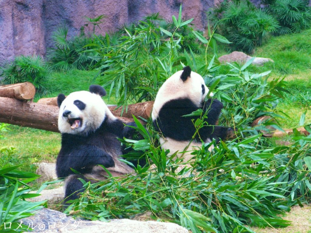 Best Places To Visit In Macau - Macau Giant Panda Pavilion