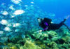 Top 10 Dives : Best Countries For A Scuba Diving Locations