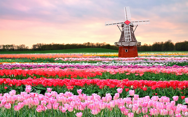You Need To Know About The Netherlands Keukenhof