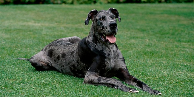 Others Dog Breeds For Travellers