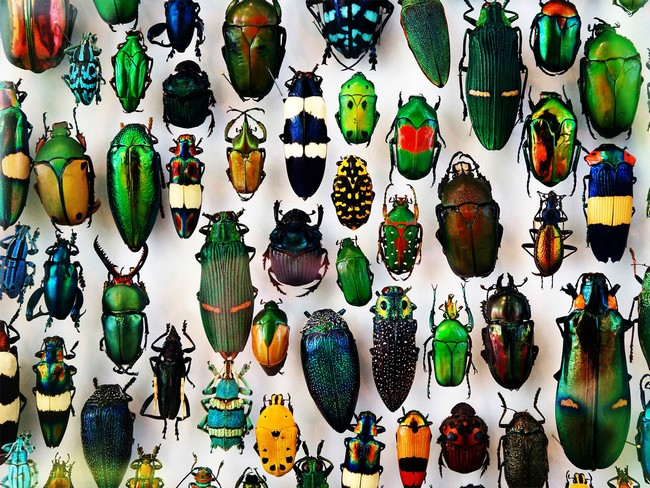 The Insects You Can Eat