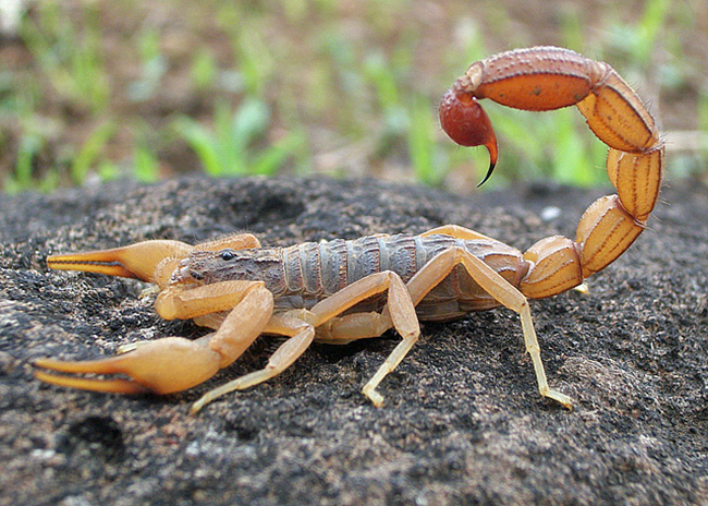 Insects You Can Eat