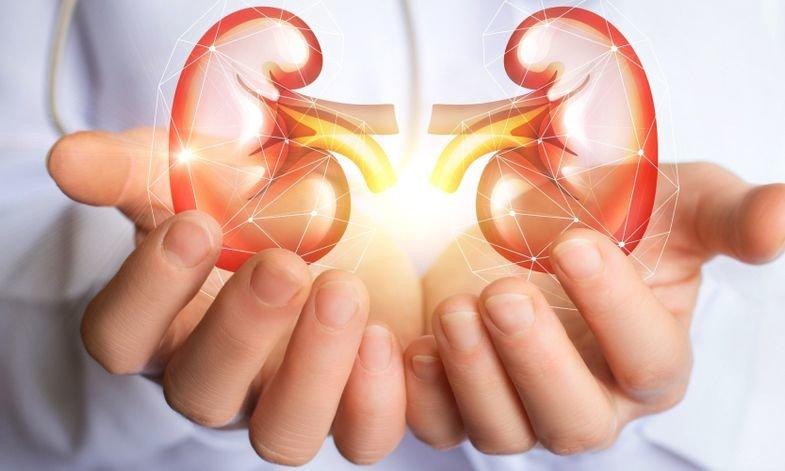 Ways To Take Care Of Your Kidneys As Check Them