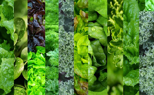 Food to combat high blood pressure As Leafy Greens