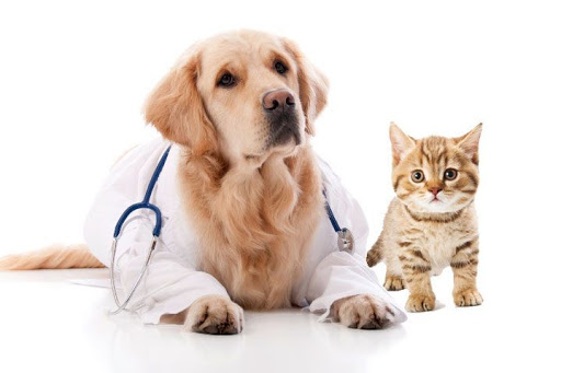 Insurance You Should Buy At Every Age As Pet Insurance